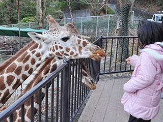 東山動物園の駐車場の混雑状況は?近い穴場や無料駐車場はどこ?【まとめ】