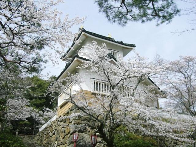 小倉公園@岐阜県美濃市2018桜の開花・見ごろ・混雑は?【子連れでお花見におすすめ】