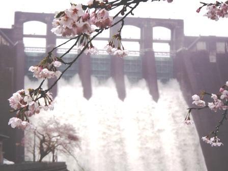 丸山ダム・蘇水峡でお花見2018開花・桜の見ごろ・混雑は?【子連れでお花見】