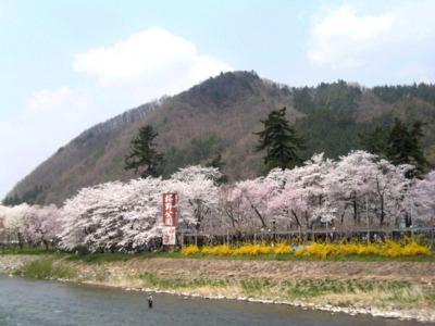 桜野公園@岐阜県高山市の2018の桜の開花・見ごろ・混雑は?【子連れでお花見】