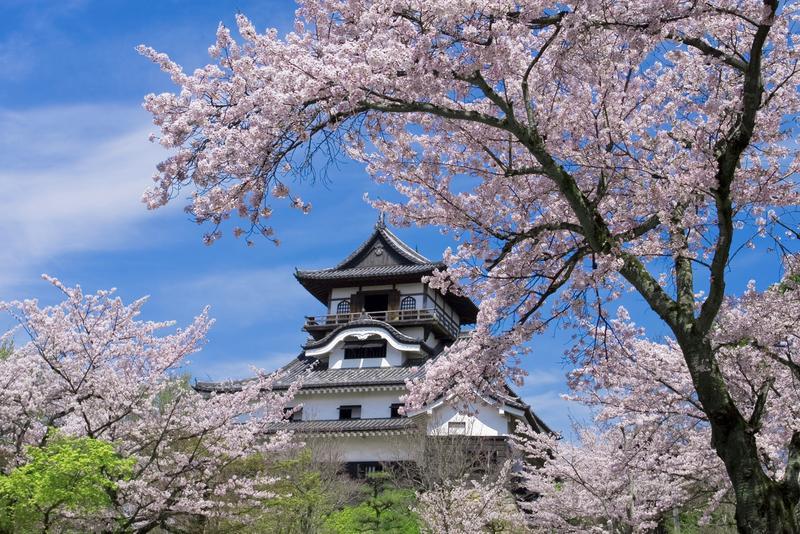 犬山城の2018桜の花見の駐車場・開花時期・見頃・交通規制・犬山祭は?【子連れ花見】