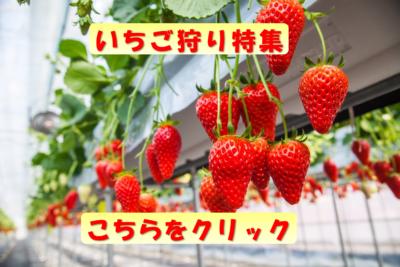 愛知県のいちご狩りおすすめスポット特集!子連れ・当日OKや地域情報も!